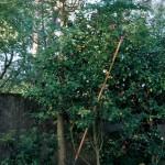 2004 - Paraisos perdidos II. 135,5 x 114,5 cm